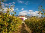 konavle_wine_train_(2)_17056