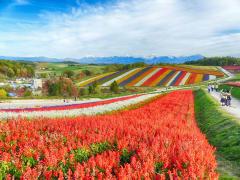 Hokkaido_Biei_Shikisai_no_Oka_Flower_Field_shutterstock_757355299