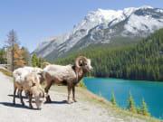 Canada_Banff_Minnewanka lake_shutterstock_78725113