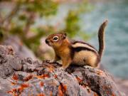 Banff_Minnewanka lake_shutterstock_1176885364