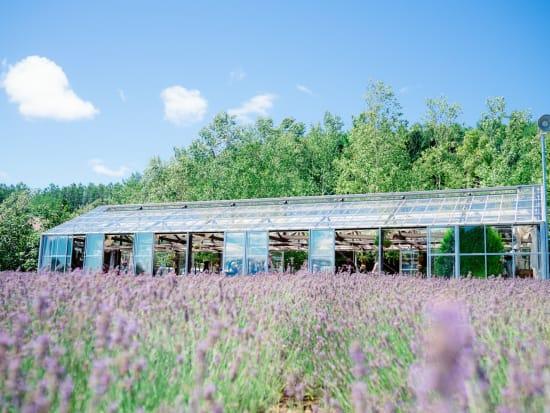 Hokkaido_Furano_Farm_Tomita_Lavender_shutterstock_475341070