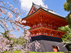 Ninna-ji Temple grounds