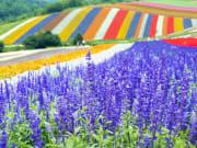 Hokkaido_Furano_Farm_Tomita_shutterstock_720666037