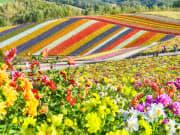 Hokkaido_Biei_Shikisai_no_Oka_Flower_Field_shutterstock_757349497
