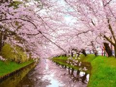 Japan_Aomori_Hirosaki_Park_shutterstock_1280582305