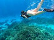 Great Barrier Reef, Snorkeling