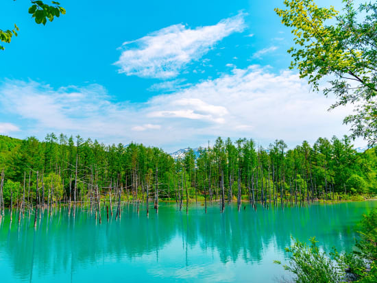 Japan_Hokkaido_Biei_Blue_Pond_summer_shutterstock_1655141308-2
