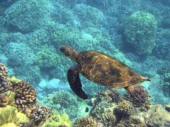 sea-turtle-547162_1920