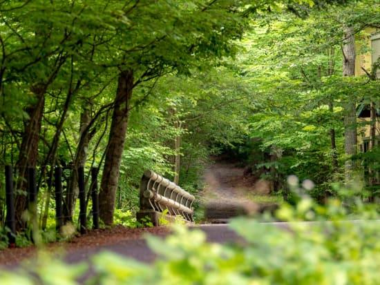 木立の別荘地をサイクリング