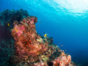 Hawaii_Big Island_Kona_Scuba Diving_Reef_shutterstock_659332270