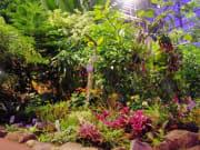 植物 (11)