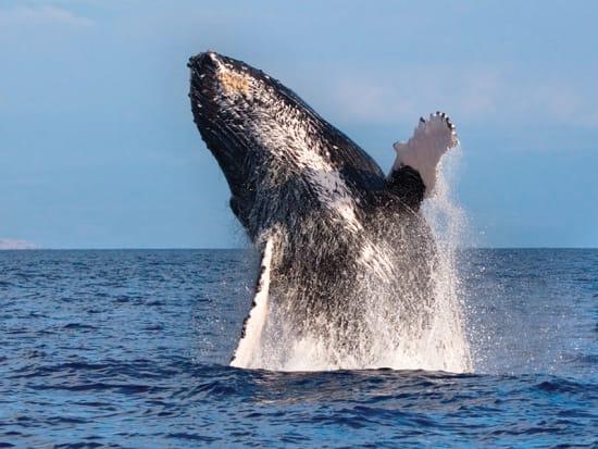 whale-breach (1)