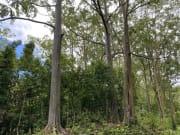 ユーカリの森
