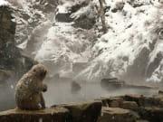 雪猴444