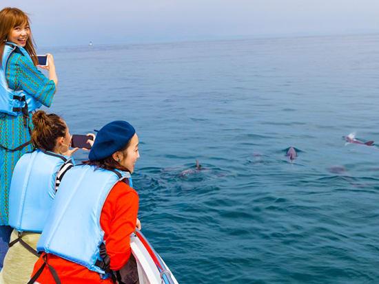 dolphin_photo06