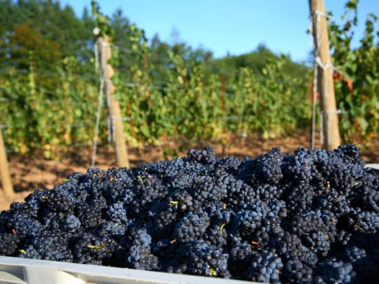 Grapes_Winery_shutterstock_37983421