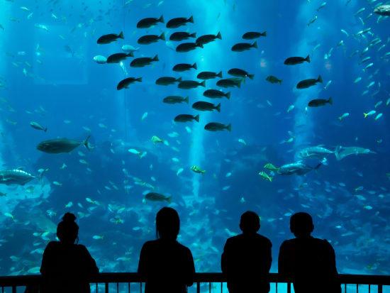 Singapore_Sentosa_SEA Aquarium_shutterstock_622109612