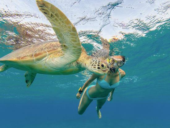 snorkel with turtle_swim_snorkel_hawaii_shutterstock_699388027