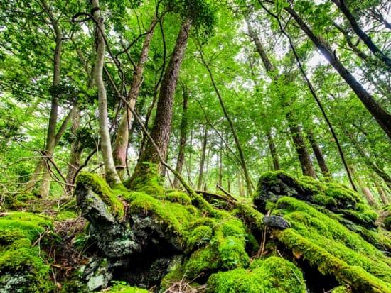 Japan_Yamanashi_Aokigahara_pixta_67207267_M