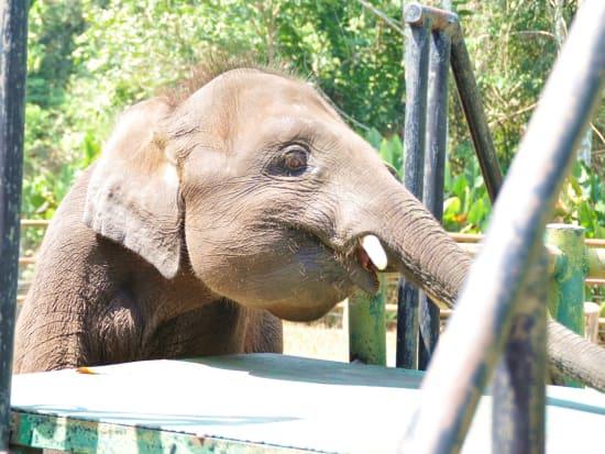 Lokkawi Elephant Photo 2