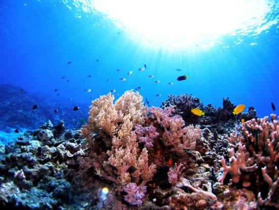 Japan_Okinawa_Kerama Islands_scuba diving_coral reef_shutterstock_551575537