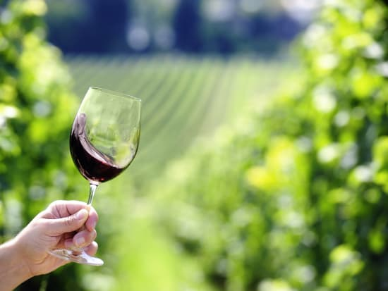 Vineyard_wine_shutterstock_137702114