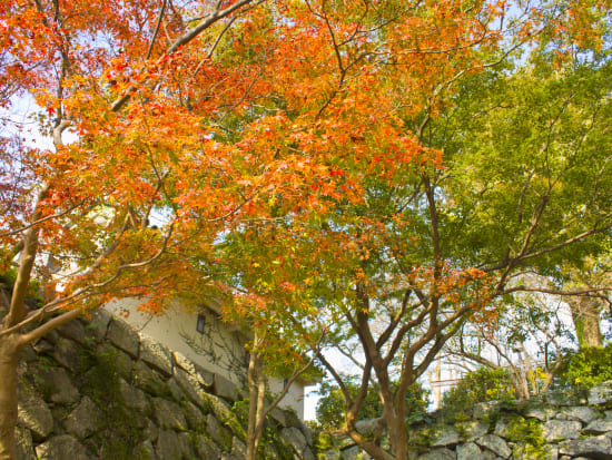 Japan_Saga_Karatsu Castle_pixta_60069117