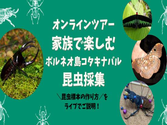 最新オンラインツアー昆虫 (1)
