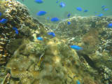 潜ってすぐにこんなにたくさんの魚がおる!
