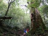 樹齢2000年をこえる七本杉に感動