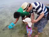 小さな青い魚を発見!