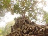 この写真は乾季のもの。雨季は暑いそうですが、苔が多く素敵だそうです!