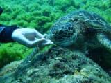 10m未満でもカメに会えましたょ♪海藻も手から食べてくれました(^^♪