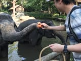 動物園での像のえさやり