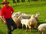 ショーマンと羊たち