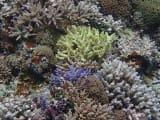 美しい枝サンゴ