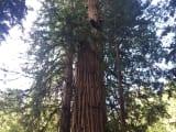 大きな大木