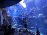 科学アカデミー内の水族館