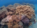 珊瑚ポイント