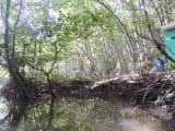 マングローブ林手漕ぎボートクルーズ