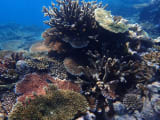 シュノーケル・サファリに参加したら元気な珊瑚まで連れて行ってもらえました