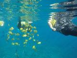 熱帯魚もいっぱい