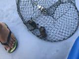 小さな蟹がとれました