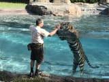 タイガーショー