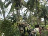 椰子の木に癒されました。