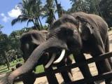 ゾウさんもサービスいいですよ