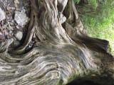 木の根っこがとてもすごい波打っていました。