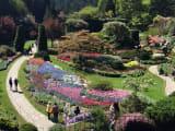 色とりどりの花が満開のブッチャートガーデン