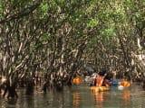 水路の中を進むカヌー
