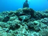 ウミガメにも出会えました。